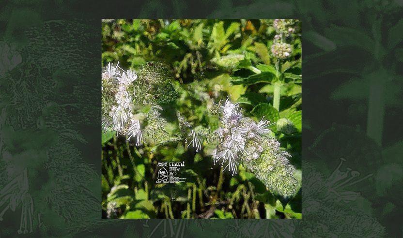 Nachtdigital Mint: Vinyl-Compilation zur letzten Ausgabe des Festivals